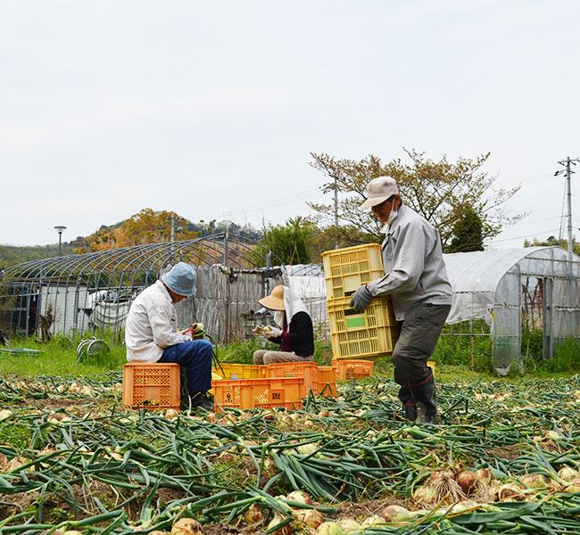 Awajisima Fresh Vegetable 五色ひかりファーム